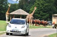 Autoperiskop.cz  – Výjimečný pohled na auta - ZOO Dvůr Králové a Nissan představily nový projekt E-safari na podporu provozu elektromobilů