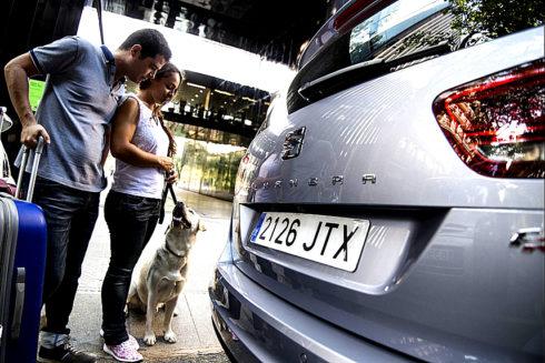 Autoperiskop.cz  – Výjimečný pohled na auta - Je snadné jet na výlet i s domácím mazlíčkem, pokud dodržíte několik praktických rad pro zajištění zdraví a bezpečnosti zvířete: 8 tipů pro cestování s domácími mazlíčky
