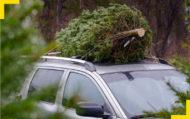 Autoperiskop.cz  – Výjimečný pohled na auta - ÚAMK radí: Povezete vánoční stromek